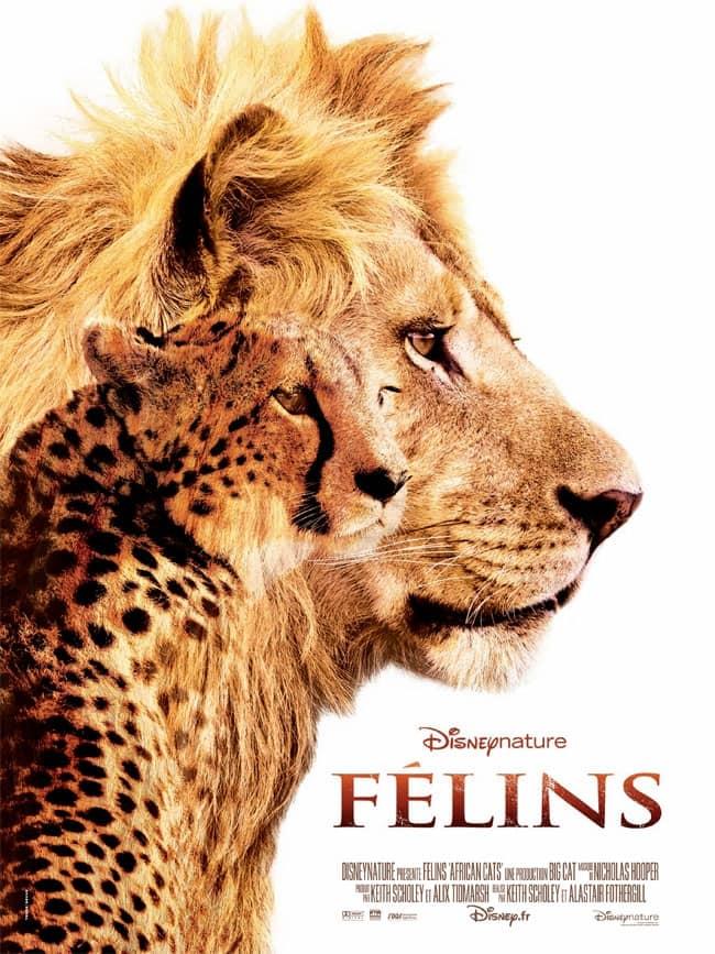 L'affiche de Félins