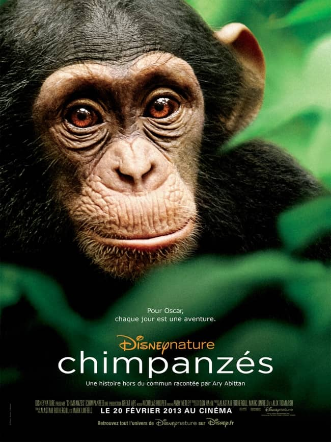 L'affiche de Chimpanzés